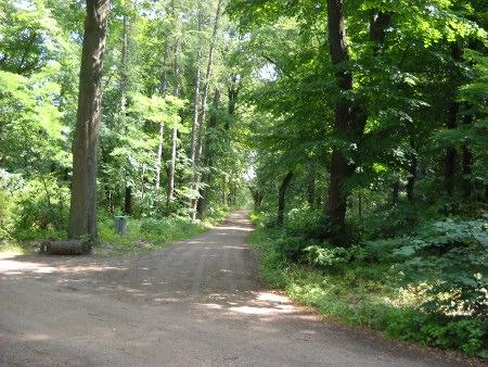 Pfaueninsel Bäume und Wege